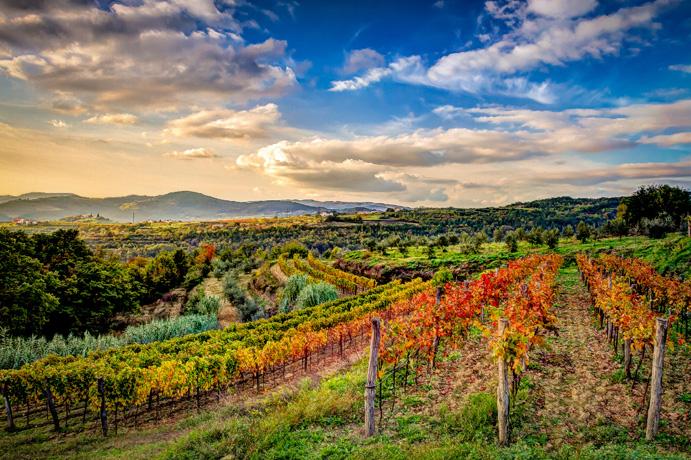 istria_vineyards-in-autumn