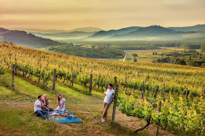 istriatb_vineyard picnic
